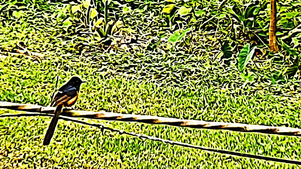 4/12/19: Bird on a Wire (a haiku)