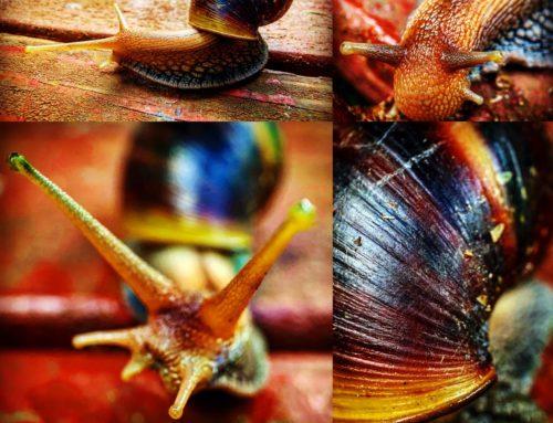 The Marco Eye (Shelled Slug-fest)