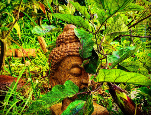 8/3/20: Meaning Meditation